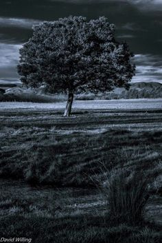 Lone Tree, Martinborough