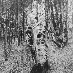 Landscapes / Buchenwald II 1903