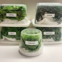 How to store leafy greens and herbs - Vegan Tips Healthy Life, Healthy Living, Cooking Time, Food Hacks, Food Porn, Good Food, Food And Drink, Healthy Recipes, Ethnic Recipes