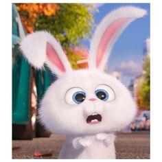 New Funny Disney Wallpaper Life Ideas Cute Bunny Cartoon, Cute Cartoon Pictures, Cartoon Pics, Cute Cartoon Wallpapers, Snowball Rabbit, Rabbit Wallpaper, Pets Movie, Secret Life Of Pets, Cute Disney Wallpaper
