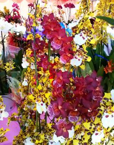 A Woman Architect´s Sensibility. Just orchids