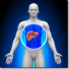 Liver Congestion and Adrenal Fatigue Syndrome