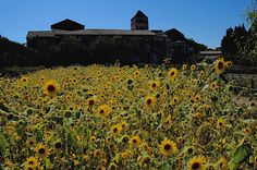 Photo Essay: If I Lived in Provence (Margo Millure)