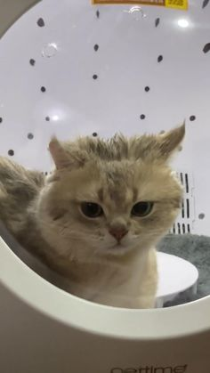 How To Avoid Hurting Your Cat While Bathing?