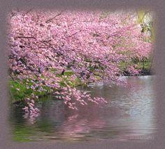 ~ Моя  Вселенная ~: Неповторимая, волшебная  весна!