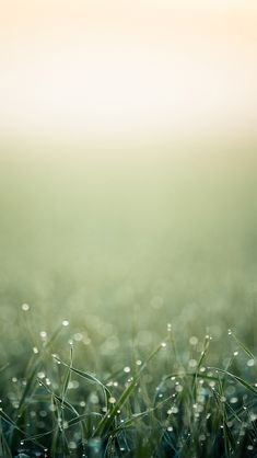 Blurred minimalistic grass