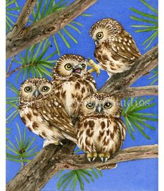 Owl Art! Here are four fun Saw-Whet Owls playing in this watercolor painting. Prints are available at TracyLizotteStudios.com.
