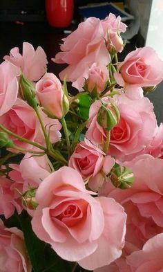 Rosas/Roses