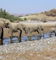 elephants spotted at waterhole on Namibia safari Wooden Hut, Safari Holidays, Tent Set Up, Dome Tent, African Safari, Home And Away, Elephant, Coast, Camping