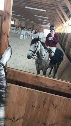 // Georgia Rose // // Georgia Rose // - Art Of Equitation Cute Horses, Pretty Horses, Horse Love, Beautiful Horses, Georgia, Horse World, Horse Pictures, Horse Photography, Show Horses