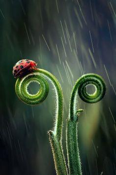 tear n rain by harry aiee
