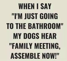 Jokes Quotes, Dog Quotes, Funny Quotes, Really Funny, The Funny, Dog Day Afternoon, Family Meeting, Best Comments, Good Buddy