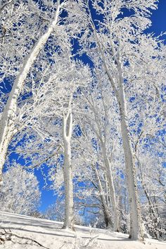 Blue and White of Winter