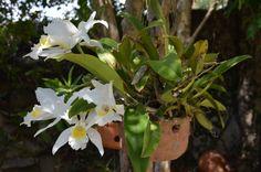 Flores do quintal.