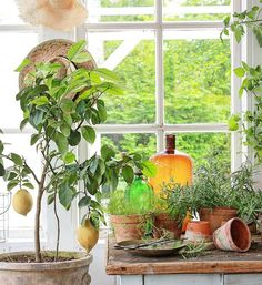 Jeg elsker å leke meg med farger...Både på lerretet og i min verden av nytt,brukt og gammelt. Det er nok derfor jeg er så glad i gamle flasker og se hvordan lyset leker med farger og struktur...akkurat som her❤ Nydelig kveld alle sammen ❤  #botanical #orangeri #vintage #levlandlig #lantliv #vakrehjemoginteriør #interiørmagasinet #vibekedesign