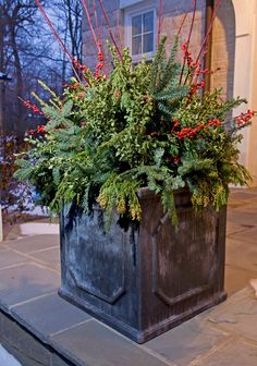 Fill planters with cut evergreen boughs, branches and berries. Look around your yard and use found items such as pine, boxwood, yew, and holly, or try dried hydrangea flowers and seedpods. A winter display arrangement adds the finishing touch to your garden and looks beautiful under a light dusting of snow.