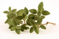 5 remedios caseros para la tos - Plantas Medicinales Plantas Medicinales