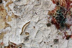 Ripe with Decay in Decaydent by Victoria Joy Dryden, via Behance