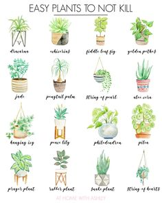 Easy House Plants, House Plants Decor, Garden Plants, Potted Plants, Indoor Plant Decor, Fruit Garden, Balcony Garden, Good Indoor Plants, Indoor House Plants