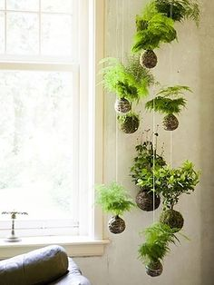 """KOKEDAMA The name is derived from the Japanese words for moss (""""koke"""") and ball (""""dama""""), essentially creating a string garden. Kokedama is a great option for displaying low-light loving plants and can even be arranged as a hanging garden."""