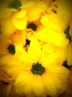 yellow flowers Wonderful Flowers, All Flowers, Yellow Flowers, Wedding Flowers, Mellow Yellow, True Beauty, My Sunshine, My Favorite Color, Beautiful World