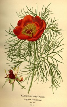 Favourite flowers of garden and greenhouse / - Biodiversity Heritage Library