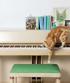 Pets are part of the family, too!  Here are the top 10 pet-owner mistakes, and how to fix them, from realsimple.com.