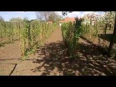 (156) Málna tavaszi tápoldatozása - YouTube