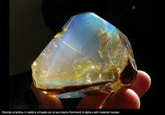 Opale con frammenti di alghe e rocce.