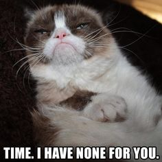 Enjoy these hilarious grumpy cat memes that will make you laugh your face off! Grumpy Cat Quotes, Funny Grumpy Cat Memes, Cat Jokes, Funny Cats, Funny Animals, Cute Animals, Funny Memes, Grumpy Kitty, Funniest Animals