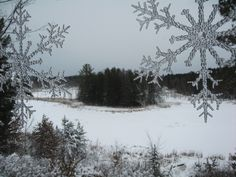 New Year's Day - 2012 - view out my window of the beaver pond.