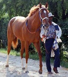 Secretariat, awesome pic! Horse memories.