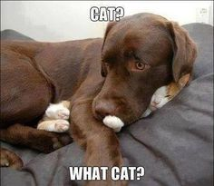 """""""I don't see a cat"""" The Best !!!"""
