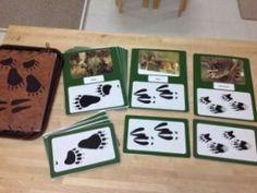 Zoology: Animal Tracks- Montessori