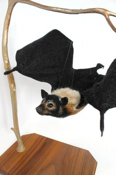 Flying Fox Bat Bat Needle Felted Sculpture Art Wildlife
