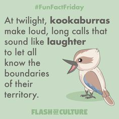 FUN FACT: At twilight, kookaburras make loud, long calls that sound like laughter to let all know the boundaries of their territory. Fun Facts For Kids, Wtf Fun Facts, Australia Fun Facts, Australia Photos, Play Based Learning, Fun Learning, Teaching Kindergarten, Teaching Kids, Animal Activities