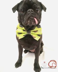 Tuesday's Ties - Fashion, Comfort and Quality. Every dog will look great in a Tuesday's Bow Tie! #sponsored