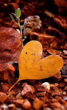 Corazón de hojas
