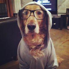 hoodie dawg