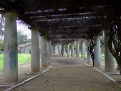 The wisteria arbor at Roeding Park, Fresno, CA. Flickr photo by lierne, shared under Creative Commons license, details @ http://creativecommons.org/licenses/by-nc/2.0/ .