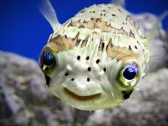Dieser Fisch sieht einfach glücklich aus