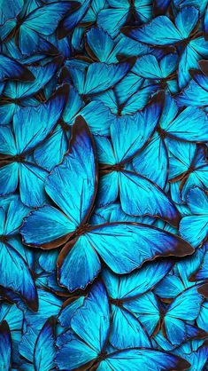 iPhone 8 Wallpaper Blue Butterfly with HD Resolution iPhone 8 Wallpaper Blue Butterfly is the best high definition iPhone wallpaper in You can make this wallpaper for your iPhone X backgrounds, Mobile Screensaver, or iPad Lock Screen Blue Butterfly Wallpaper, Butterfly Background, Colorful Wallpaper, Flower Wallpaper, Classy Wallpaper, Animal Wallpaper, Iphone 8 Wallpaper, Galaxy Wallpaper, Wallpaper Backgrounds