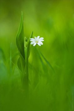 Green Meadow with a White Flower