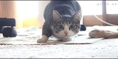 Search Results for cat GIFs on GIPHY