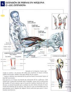 Extension de Piernas en Maquina o Leg Extensions