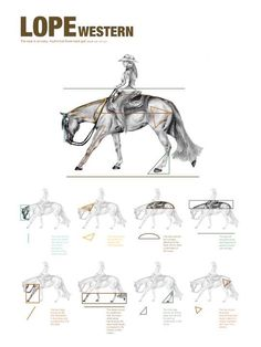Horse lope