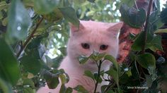 Gatinho na árvore