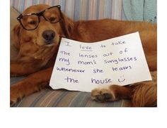 29 Hilarious Photos Of Dogs Being Shamed For Their (Adorable) Crimes