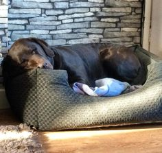 """Toby says """" You leave you bed for 5 mins and Farah jumps in it"""" by labradors4life"""