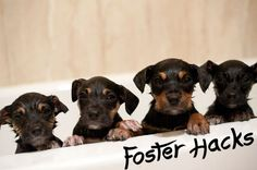 Tips From a Foster Mom and Rescuer by foster mom and animal rescuer Megan Penney As a former foster mom who has fostered a hundred, maybe more dogs/puppies in the past decade, I have realized some pretty neat tricks and tips to help save some time and money with foster dogs. In this post, I…